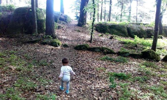 skog4-2